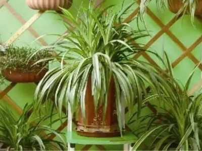 最适合养在家里的8大植物 家里最适合养的植物