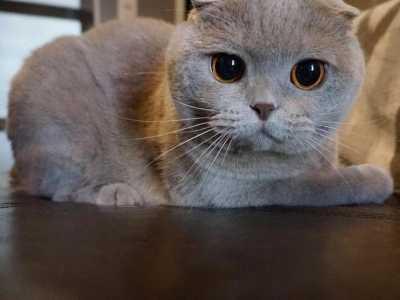 为什幺猫咪总喜欢把碗里的食物叼到其他地方吃掉 猫喜欢什幺东西