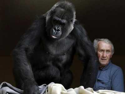 法国夫妇抚养大猩猩18年 黑猩猩夫妇