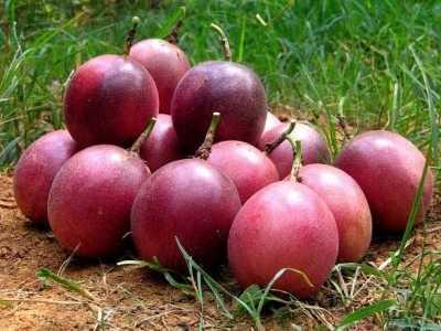 此水果对人体起到重要作用 水果对人体的作用