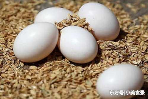 2岁宝宝吃鸽子蛋的禁忌