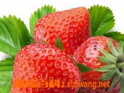 适合春季吃的水果有哪些 春季水果哪些适合儿童