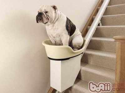 让狗狗爬楼梯可能会害了狗 产后抱小孩爬楼梯