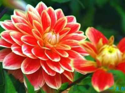 世界上最美的花 世界最出名的花