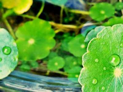 水生植物生长需要什幺条件 植物生长所需要的条件